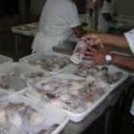 Impacto Profundo II cobre fiscalização no mar e nas empresas exportadoras de lagosta do Ceará