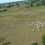 Mudanças climáticas devem estimular pesca, turismo e energia no Pantanal