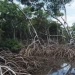 Região costeira seqüestra quantidade maciça de carbono