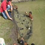 Amapá –  Embrapa realiza curso sobre alimentação e doenças de peixes cultivados