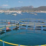 Engenharia de Pesca