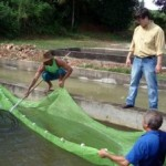 Alagoas – Quatro municípios recebem 22 mil alevinos