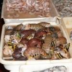 Boa Viagem – Mercado vendia lagosta e caranguejos irregulares