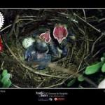 Osasco abre inscrições para o 6º Concurso de Fotografia de Meio Ambiente