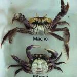 Começou o terceiro período do defeso do caranguejo em Sergipe