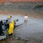 Resgate de peixes entre as ensecadeiras da UHE Estreito é realizado com sucesso