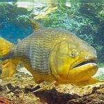 Dourados estão protegidos por lei até 2013 em parte do Pantanal
