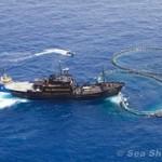 Sea Shepherd liberta 800 atuns-azul de gaiolas flutuantes na Líbia