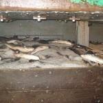 Polícia Federal e Ibama flagram pesca ilegal em Porto Belo e Bombinhas