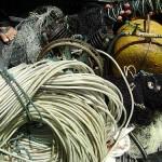 Ibama apreende lagostas imaturas e material de pesca predatória