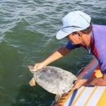 Ibama fiscaliza desova de tartaruga e multa pescadores em R$ 90 mil no Pará