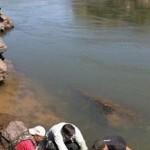 Pesquisadores capturam e marcam peixes no Rio Araguaia