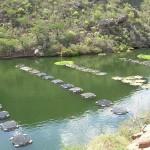 Aquicultura e pesca estão em destaque esta semana em Alagoas