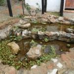 Nascente do Parque dos Palmares é revitalizada pela Secretaria de Meio Ambiente de Osasco