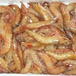 Frota pesqueira de camarão do Sul e Sudeste terá mais 90 dias para solicitar permissão de pesca