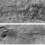Encontrado em Valência uma espécie de peixe que viveu há 10 milhões de anos