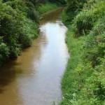Cetesb analisa mortandade de peixes no Rio Corumbataí