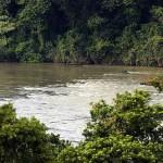 IAP proibe pesca nos rios do Paraná para garantir reprodução dos peixes