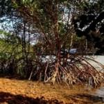 Instituto Chico Mendes promove concurso fotográfico sobre manguezais do Brasil