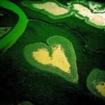 Os Dez Mandamentos Ambientais