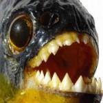 Orientação para evitar acidentes com peixes