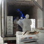 Ibama doa 60 toneladas de peixes a instituições beneficentes no Pará