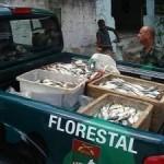 Polícia apreende 230kg de sardinha comercializada irregularmente no Rio de Janeiro