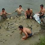 Lei regulamenta produção de pescado em Goiás