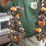 Ibama apreende cerca de 160 kg de caranguejo em Natal