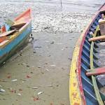 Mortandade misteriosa de peixes no litoral do Paraná