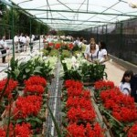 """Inscrições ainda abertas para os cursos de """"Horticultura"""" e """"Produção de Flores e Jardinagem"""
