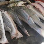 Sema doa pescado e carne apreendidos no mercado de Abaetetuba