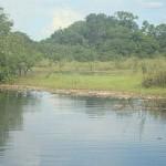 """Resultado final confirma que foi a """"Decoada"""" que levou à morte milhares de peixes no rio Negro"""