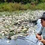 Falta de oxigênio é uma das causas de mortandade de peixes no MS