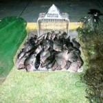 Trinta e cinco quilos de pescado irregular são doados em Minas Gerais
