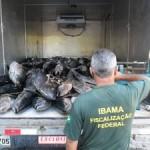 Ibama apreende 2,6 toneladas de pescado em Natal / RN
