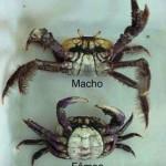 Pará – Ibama faz plantão no último defeso do caranguejo em 2011