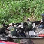 Operação Lebreia combate tráfico internacional de alevinos de aruanã
