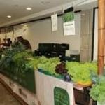 Feira de Alimentos Orgânicos do Continental Shopping completa seu primeiro ano em Osasco