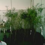 Sema realizará distribuição de mais de 400 mudas de árvores frutíferas no Jardim Rochdale e Baronesa