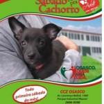 Feira de adoção de animais acontece neste sábado no CCZ de Osasco