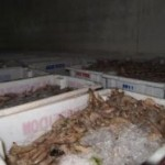 Ibama e Polícia Federal fiscalizam pesca na costa gaúcha e apreendem três toneladas de camarão