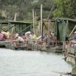 Novos rumos para a pesca com caniço no rio Araranguá / RS