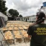 Pará –  Ibama apreende mais de 7 toneladas de barbatanas de tubarão pescadas ilegalmente