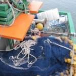 Ibama doa 3,4 toneladas de tainha em Santa Catarina