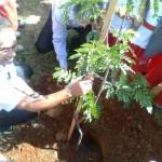 Meio Ambiente de Osasco realiza plantio de árvores na Vila Yara