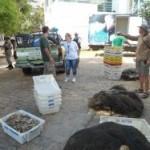 Lagoa dos Patos – Ibama fiscaliza pesca ilegal do camarão rosa