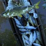 Fraudes no registro geral da pesca, Mpa intensifica ações para combater